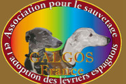 Association Galgos France
